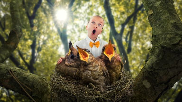 вокал, грамматически правильные предложения, птенцы, птицы